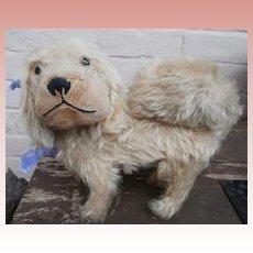Early Pekingese Dog