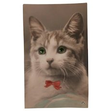 Early Glass Eyes Pussy Cat Postcard