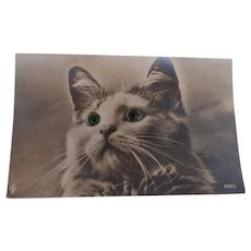 Sweet Early Glass Eyes Pussy Cat Postcard