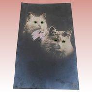 Sweet  Early Glass Eyes Cat Postcard