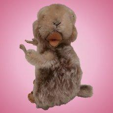 Steiff Marmot Piff , 1965 to 1969, Steiff Button