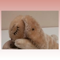 Steiff Floppy Hase, Steiff Button 1966 to 1971