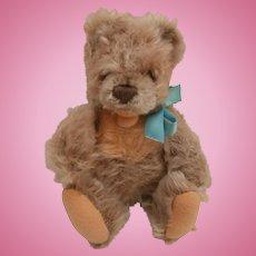 Smallest Size Steiff Zotty Teddy Bear, No Id's 1960 to 1961