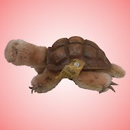 Steiff Slo Tortoise  / Turtle ,  All Id;s