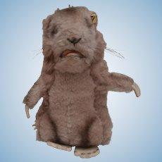 Steiff Marmot Piff , 1970 to 1977, Steiff Button