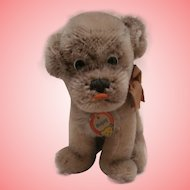 Steiff Mopsy Puppy  Bull Dog, Button/ Chest Tag