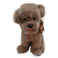 Steiff Mopsy Puppy  Bull Dog, Button/ Chest Tag