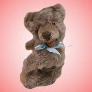Steiff Small Zotty Teddy Bear, No Id's