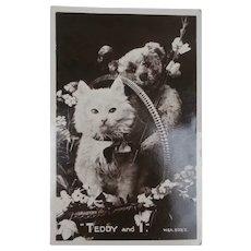 Lovely 1927 Postcard Pussy Cat and Steiff Teddy Bear