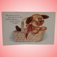 Gorgeous Tubby Dog Postcard  1913 A/F