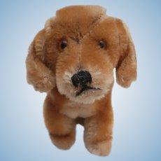 Steiff Bazi Dachshund Dog,  Steiff Button