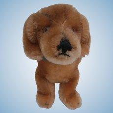 Steiff Bazi Dachshund Dog,  1967 to 1975, Steiff Button