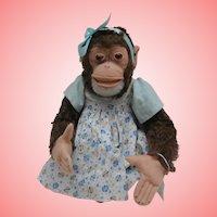 Sweet Steiff Jocko Monkey, No Id's 1959 to 1964