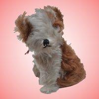 Cute  Terrier Dog 1930 /40
