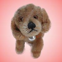 Smallest Size Steiff Bazi Dachshund Dog, Steiff Button 1959 to 1965