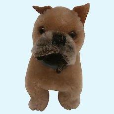 Steiff Boxer Dog, Sarras  , No Id's, 1959 to 1964