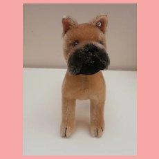 Steiff Boxer Dog, Sarras, 1959 to 1964, Steiff Button