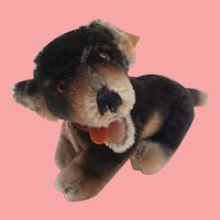 Steiff Beppo Dachshund Dog, Fully Jointed, Steiff Button / Tags ,1957 to 1961