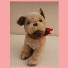 Steiff Mopsy Puppy Bull Dog, No Id's 1960 to 1964