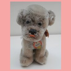 Smallest Steiff Mopsy Bull  Dog Puppy, 1960 to 1964, Steiff Button and Steiff Chest Tag