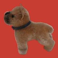 Steiff Smallest Size Sarras Boxer Dog. 1959 to 1964, No Id's