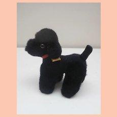 Steiff  Blacky Poodle 1978 to 1984, Steiff Label