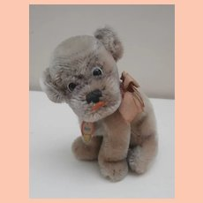 Smallest Steiff Mopsy Bull  Dog Puppy, 1965 to 1967, Steiff Button and Steiff Chest Tag