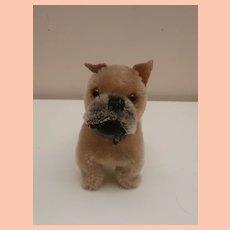 Steiff Saras Boxer Dog ,1959 to 1960, No Id's