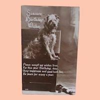Dog with Black Cloth Doll Postcard, 1930