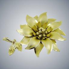 Large Coro Gold Tone Poinsettia Brooch