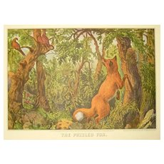 Currier and Ives Print - The Puzzled Fox - Hidden Images