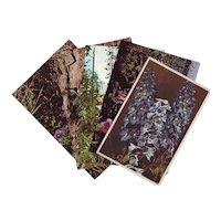 Six Vintage Photograph Postcards of Wildflowers - Unused