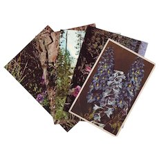 Six Vintage Photograph Postcards of Wildflowers - Unused