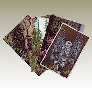 Six Vintage Real Photo RPPC Postcards of Wildflowers - Unused