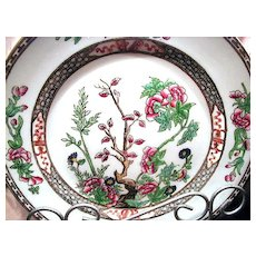 "Beautiful Coalport Indian Tree or Tree of Life Multicolor 8 ¾"" Dinner Plate"