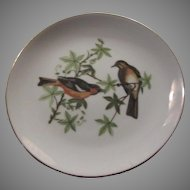 Oriole Birds Decorative Plate Fine Porcelain China Bird Art