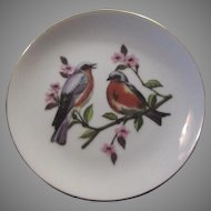 Blue Bird Plate Birds Porcelain Art