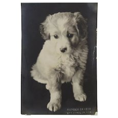 Puppy Dog Photograph  Sunset Studio Port Angeles Washington
