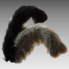 Two Edwardian Wide Prime Femina Ostrich Plumes