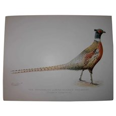 S.F. Denton Antique Print - Pheasant