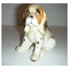 Japan Cocker Spaniel Dog