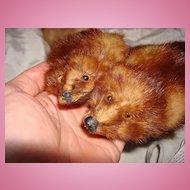 My Favorite Marten~Egyptian Furs