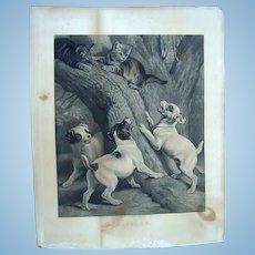 "1856 Rare Poster Sized Print ""Baffled"" by Samuel J.Carter Puppies chasing Kittens"
