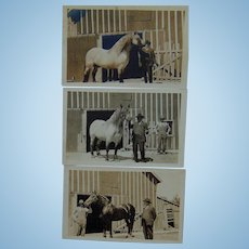 RPPC  Kinch Family Farm in Beaverhill with Prized Horses