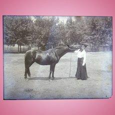 Diving Horses Doc Carver's 1894 Wild West Show Original photographs