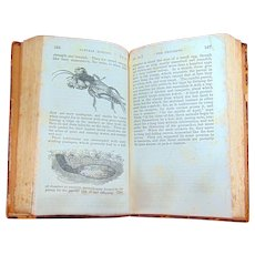 Natural History of Insects 1835