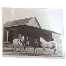 Daisy, Topsey Albert and His Ginormous White Mare~ Horse Farm Photograph