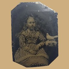 Tintype of Girl with Passenger Pigeon