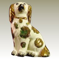 Staffordshire Pottery  Pearlware Dog Collar King Charles Spaniel Antique.