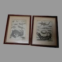 Fine Pair Circa 1789 Engravings, Reptiles, Lizard, Alligator